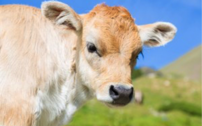 Becoming Vegan for Cruelty-Free Living