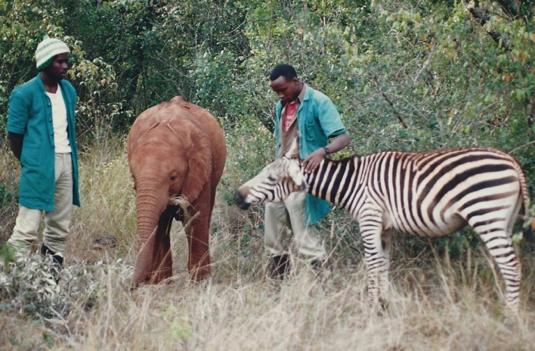 David Sheldrick Wildlife Trust: Foster an Orphan for Christmas